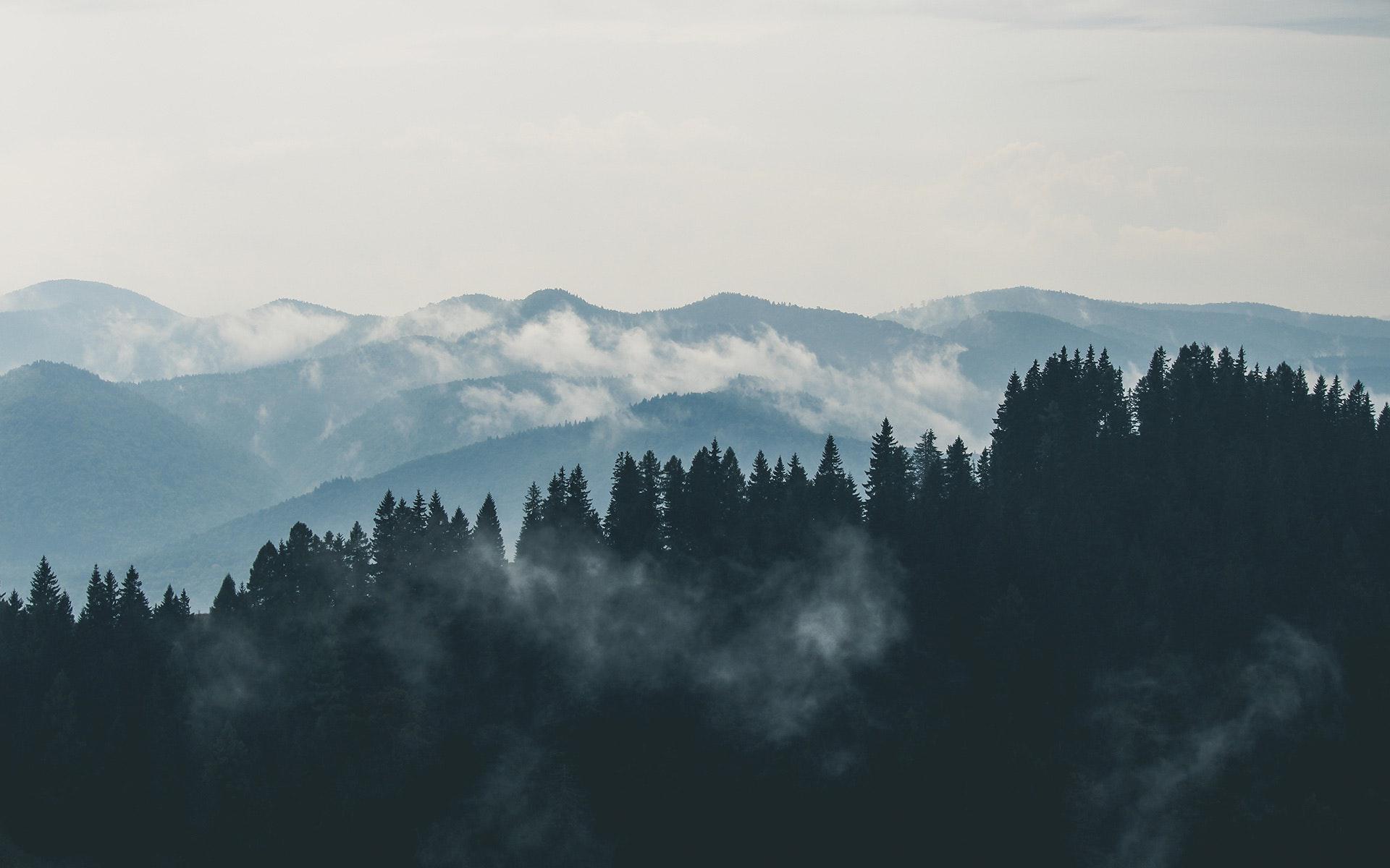 Vue sur forêt au loin avec nuages en Estrie